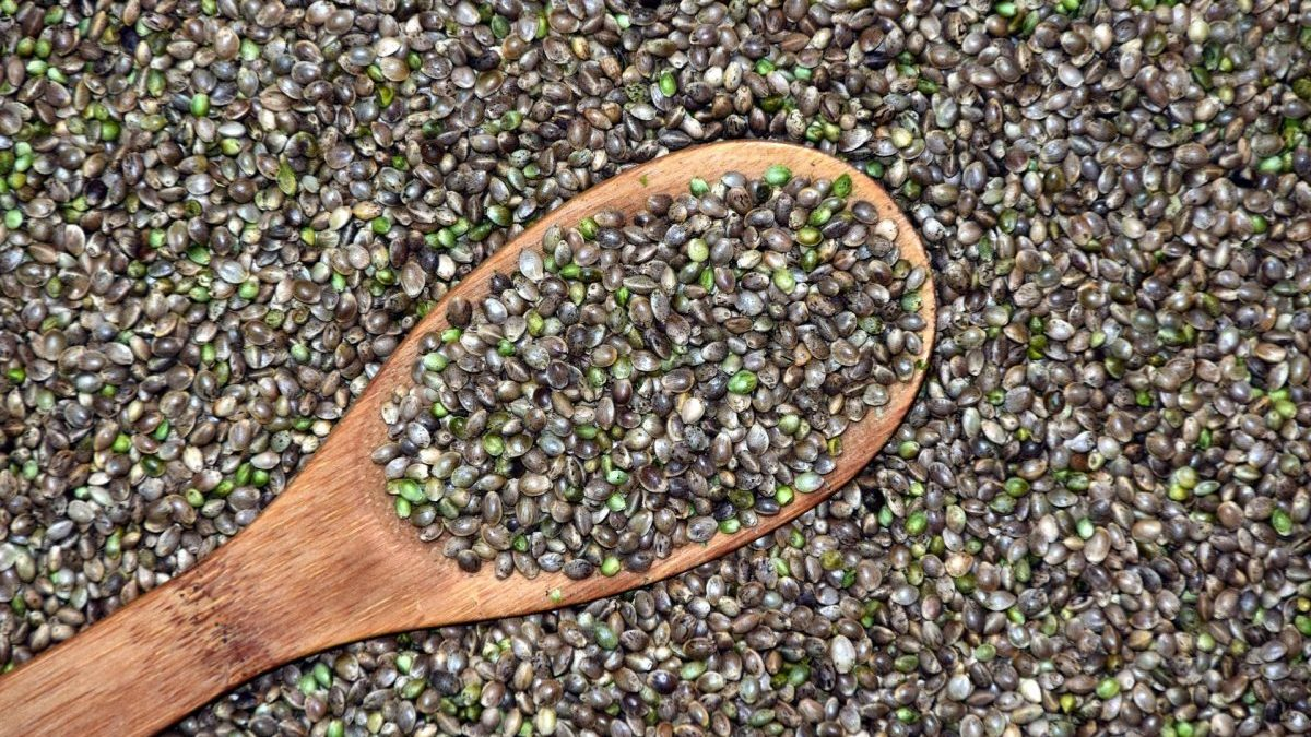 Read more about the article A Guide to Buying Quality Cannabis Seeds to Grow at Home